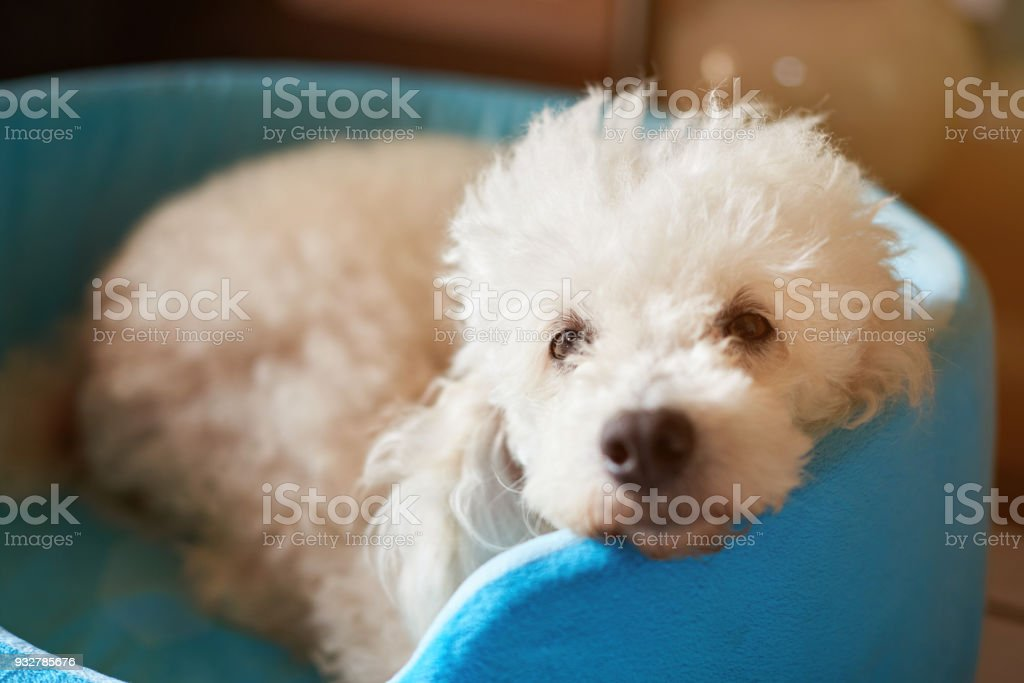 Close-up of cute fluffy dog stock photo