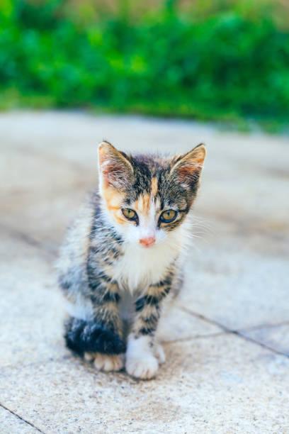 Closeup of cute kitten wandering on outdoor pavement picture id1166564638?b=1&k=6&m=1166564638&s=612x612&w=0&h=xup5oeeuz5t yti3gqw0q ie 4l w6hd7fezuozazfg=