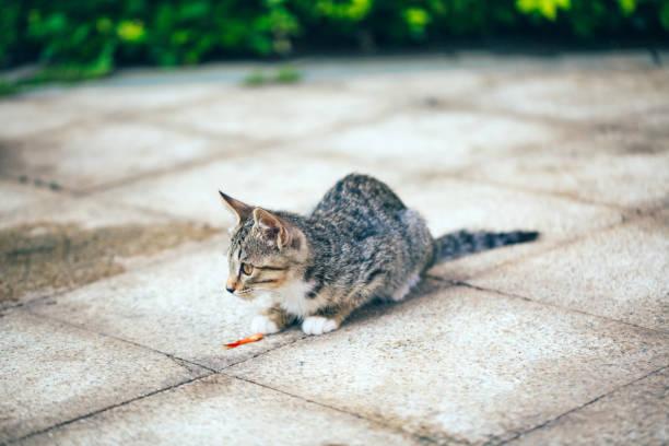 Closeup of cute kitten wandering on outdoor pavement picture id1166564697?b=1&k=6&m=1166564697&s=612x612&w=0&h=ku tq1yqukebmnv21bxaqoversh2nuo66w3 vp7rejk=