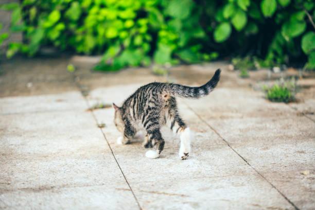 Closeup of cute kitten wandering on outdoor pavement picture id1166564698?b=1&k=6&m=1166564698&s=612x612&w=0&h=nr36n7ka1c0 xbsawzg80u2w6dyy o2uxz78uok x u=