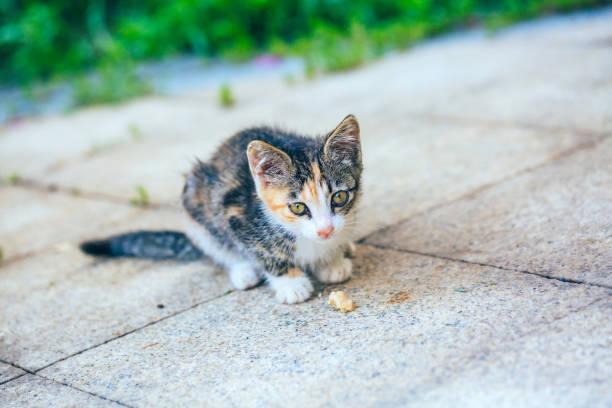 Closeup of cute kitten wandering on outdoor pavement picture id1166564927?b=1&k=6&m=1166564927&s=612x612&w=0&h=03phdlwowxc8dlpknnk1apw32f ybsm 4wpquq7ed o=