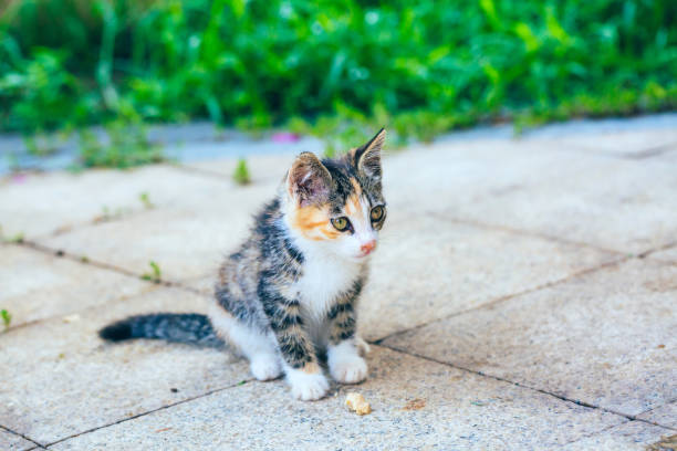 Closeup of cute kitten wandering on outdoor pavement picture id1166565751?b=1&k=6&m=1166565751&s=612x612&w=0&h=8moeuybazxqsqedkg1q3fnevdp17aq4v8elr 6rvevi=