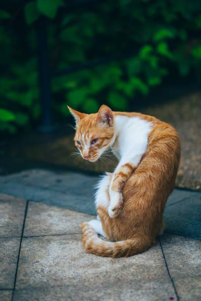 Closeup of cute kitten wandering on outdoor pavement picture id1166630839?b=1&k=6&m=1166630839&s=612x612&w=0&h=bpl6zvnzwgdngmsddizd9ilkvk5mmd9nhs4oc xzj7s=