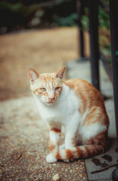 Closeup of cute kitten wandering on outdoor pavement picture id1166630848?b=1&k=6&m=1166630848&s=612x612&w=0&h=dov4qszdqrab9p6ftkk1s kkbzfwaserhzccqdblzay=