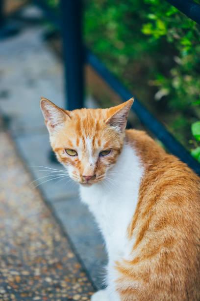 Closeup of cute kitten wandering on outdoor pavement picture id1166630853?b=1&k=6&m=1166630853&s=612x612&w=0&h=mljgwsgddollzxl bcug9khlufexnugwc8x127 d9fs=