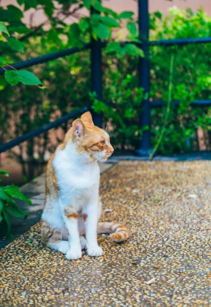 Closeup of cute kitten wandering on outdoor pavement picture id1166630968?b=1&k=6&m=1166630968&s=612x612&w=0&h=aqquk12ntouz09bn8zbieri2804q l0tjcvqfxntyi8=