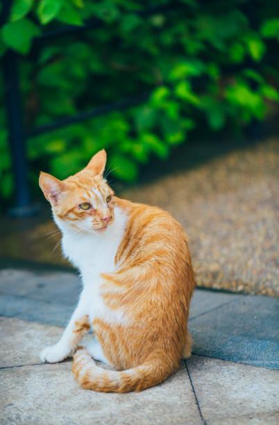 Closeup of cute kitten wandering on outdoor pavement picture id1166631057?b=1&k=6&m=1166631057&s=612x612&w=0&h=qtnfwe09lho6sgb qoezwpyizpb8qe7eckw1v6atijs=