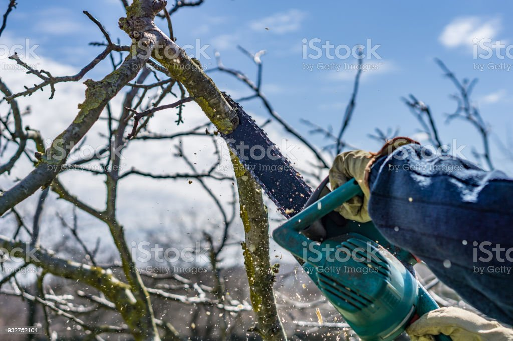 Close-up of cutting wood with electric saw, hobby machine, flying splinters. Shallow depth of focus. Concept farming.'n stock photo