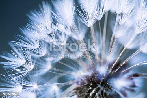 istock Closeup of dandelion 501535348
