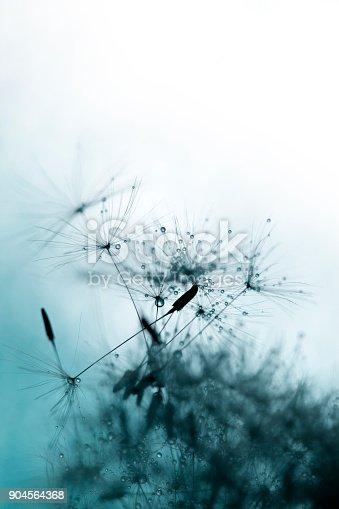 640082034istockphoto Close-up of dandelion seed 904564368