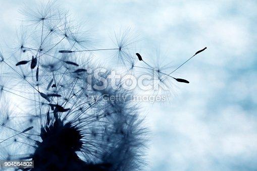 640082034istockphoto Close-up of dandelion seed 904564802