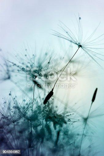 640082034istockphoto Close-up of dandelion seed 904564982