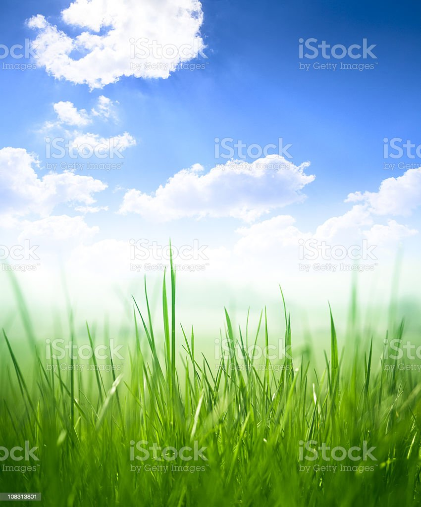 Close-up of deep green grass royalty-free stock photo