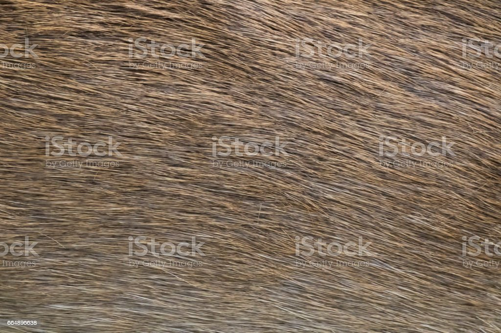 close-up of deer skin texture abstract background. foto stock royalty-free