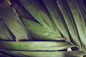 Close-up of detailed rainforest jungle leaves for background.
