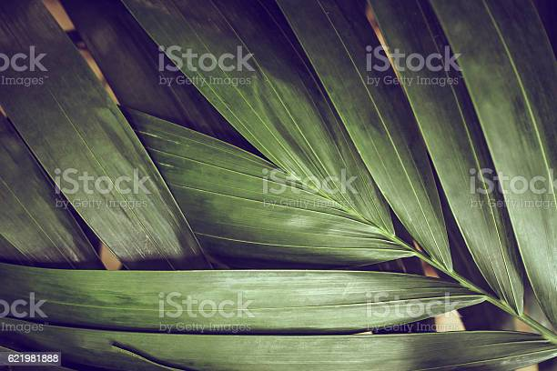 Closeup of detailed rainforest jungle leaves for background picture id621981888?b=1&k=6&m=621981888&s=612x612&h=ovkz6tp7xq4lx9fpqn3nvqg5j508lp4xymngk jnmay=