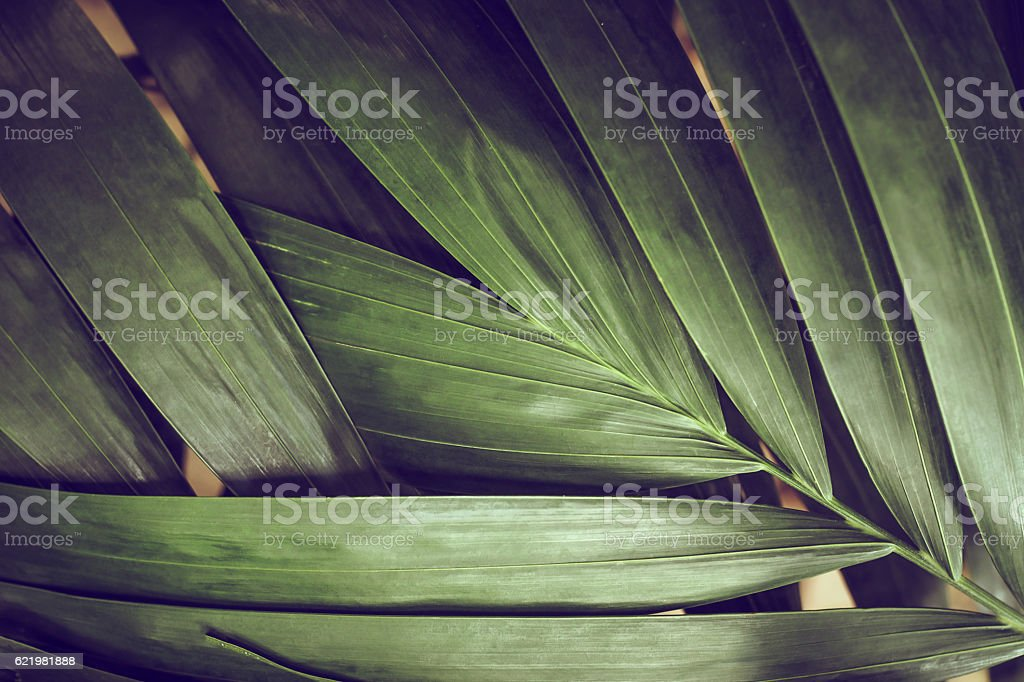 Close-up of detailed rainforest jungle leaves for background stock photo