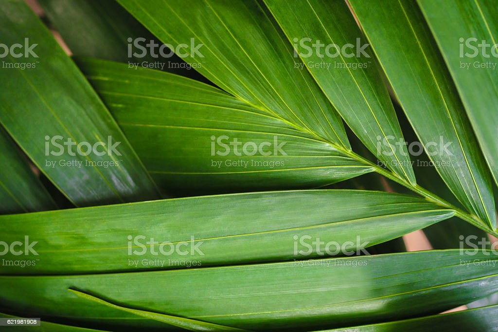 Close-up of detailed rainforest jungle leaves for background – Foto