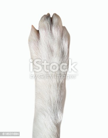 istock closeup of dog paw 618531694
