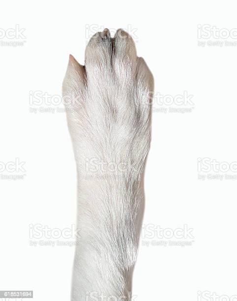 Closeup of dog paw picture id618531694?b=1&k=6&m=618531694&s=612x612&h=1qakw dzllw92ixgq5hueycladt5axt0 kotqk3qfwo=