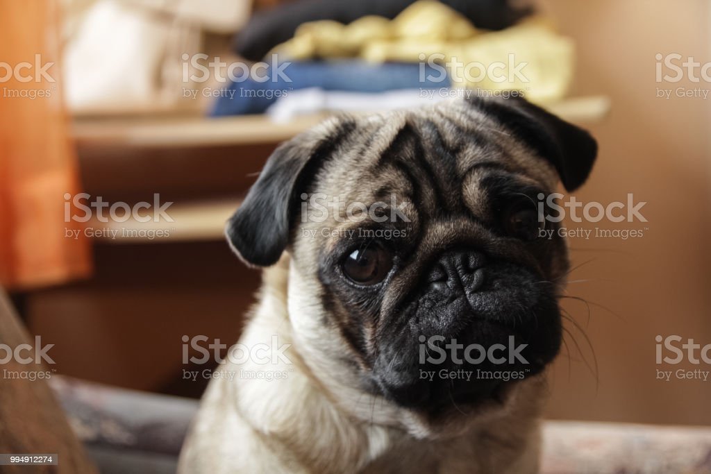 Close-up of dog royalty-free stock photo