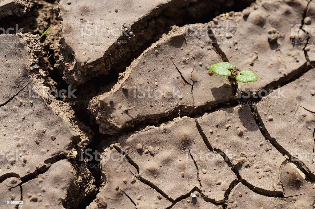 Closeup of dried cracked soil with little green plant stock photo