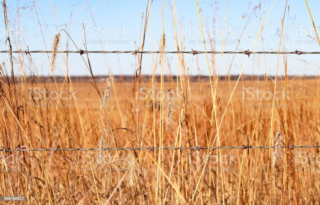 Closeup of dried grasses and a two strand barbed wire fence with horizon and blue sky in background zbiór zdjęć royalty-free