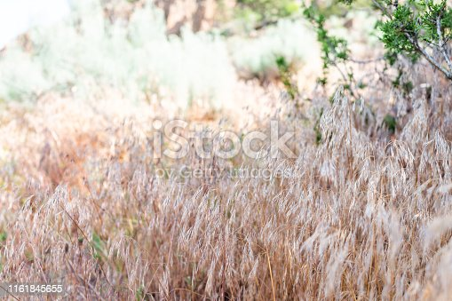istock Closeup of dry grass plants on Main Loop trail in Bandelier National Monument in New Mexico 1161845655