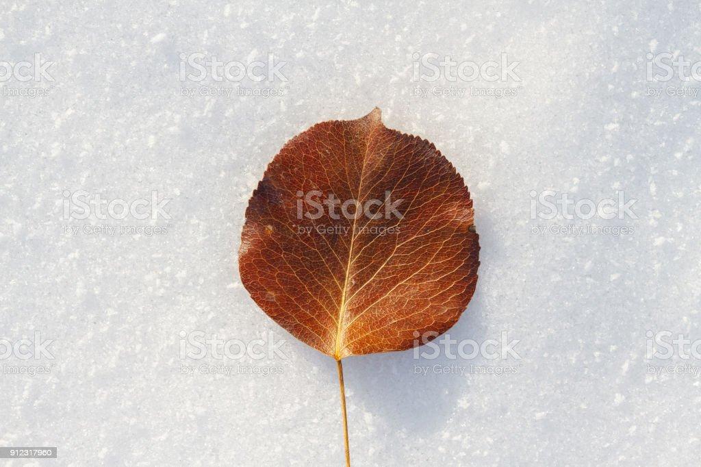 Nahaufnahme der welkes Blatt im Winter – Foto