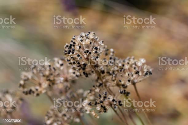 Closeup of dry meadow flowers nature background picture id1200270501?b=1&k=6&m=1200270501&s=612x612&h=y rsq q3qn8m7i9udc7a gyi2viaqdfxopkzkmjh7oa=