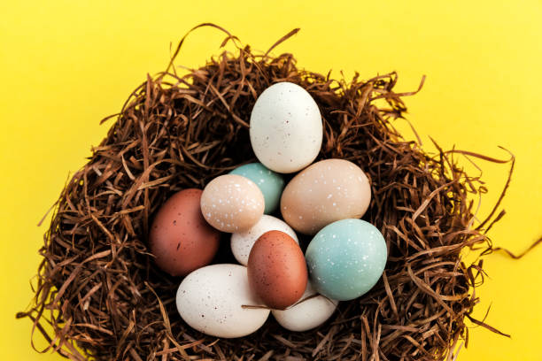 Closeup of Easter eggs in the nest on yellow background, spring celebration stock photo
