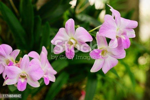 Tropical Flower, Flower, Orchid, Cymbidium, Plant