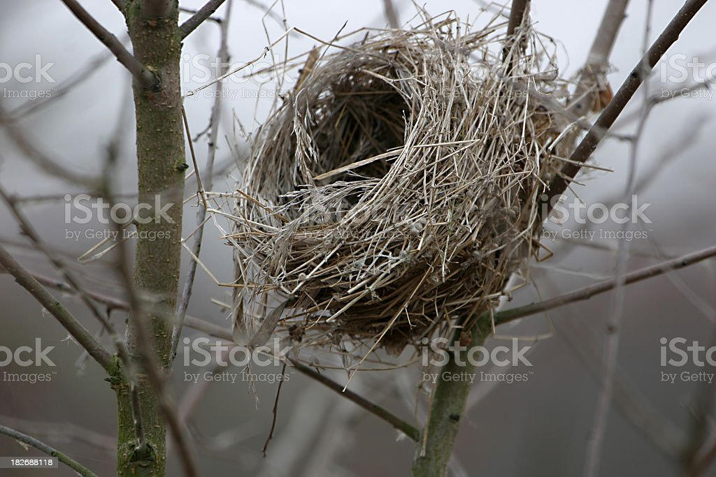 Close-up of empty birds nest in tree branch royalty-free stock photo
