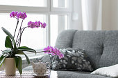 Close-up of empty living room with a purple orchid.