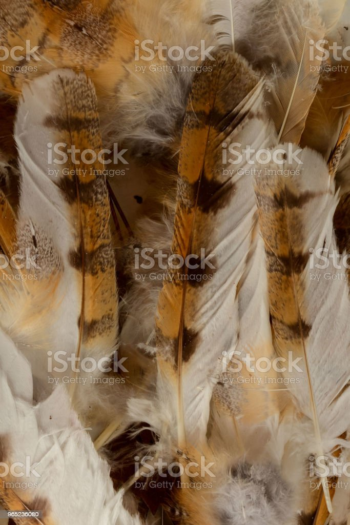 Close-up of feather plume background texture zbiór zdjęć royalty-free