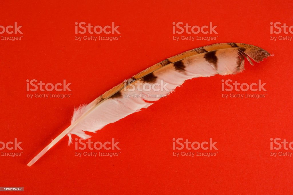 Close-up of feather plume zbiór zdjęć royalty-free