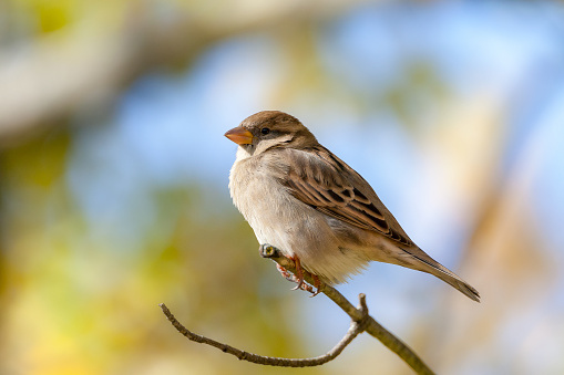 Extreme close-up of cute sparrow standing on twig against blurred background