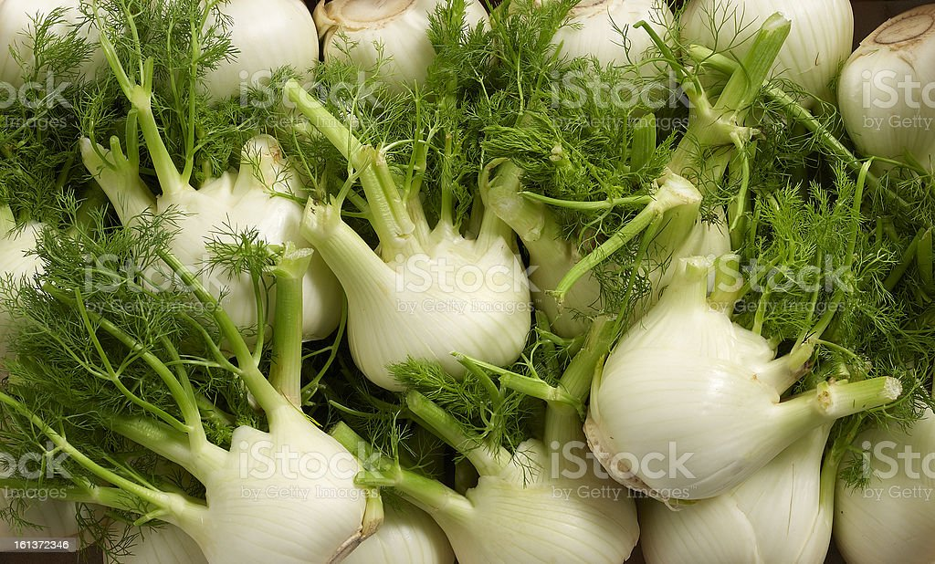 Closeup of fennel bulbs with cropped stems and leaves stock photo