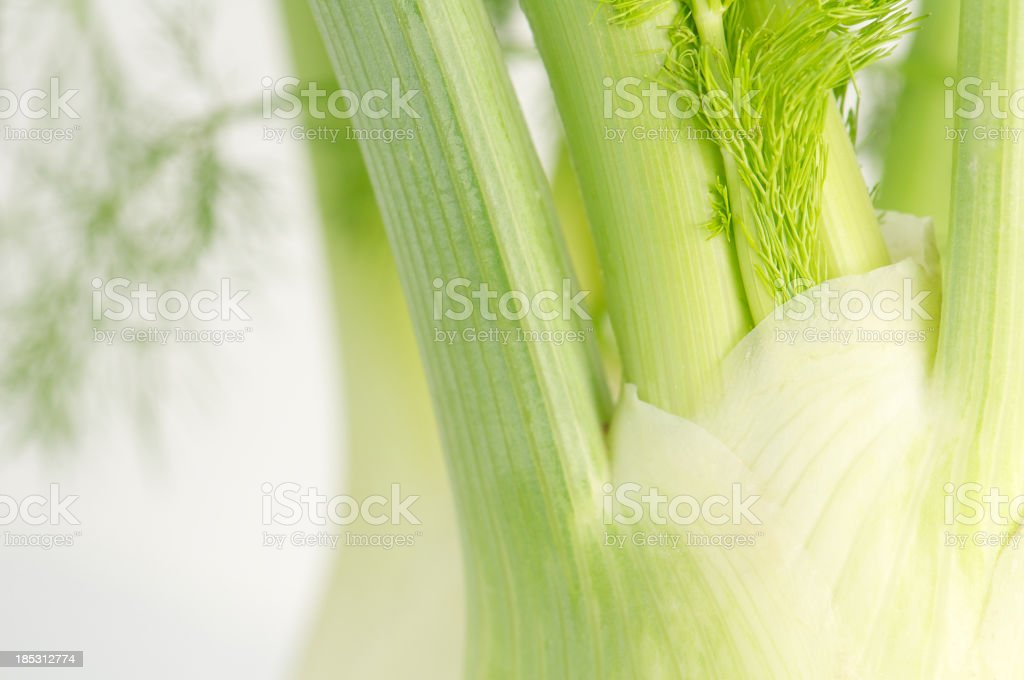 Close-up of Fennel Bulbs with Selective Focus royalty-free stock photo