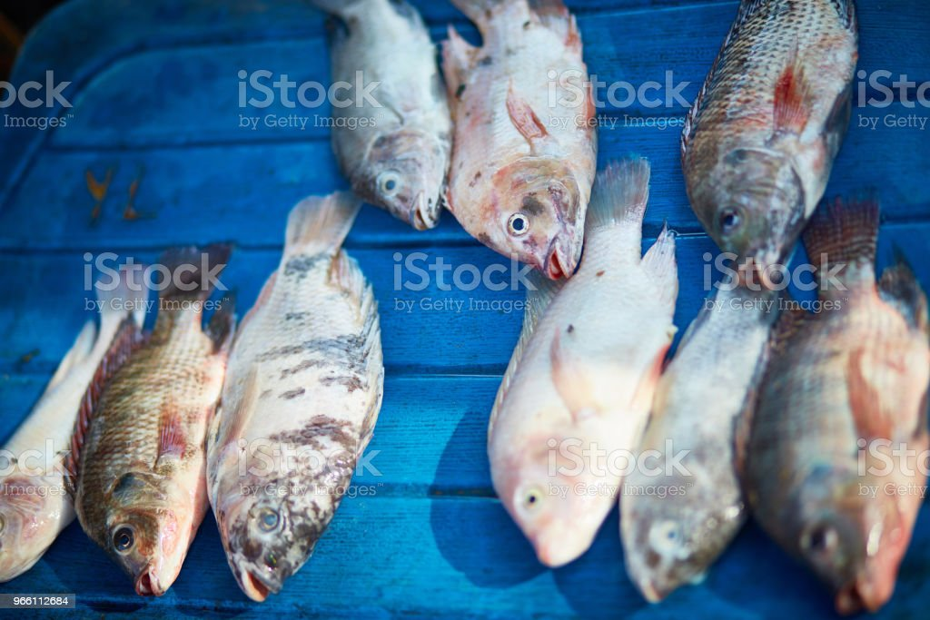 Close-up of fish arranged in market - Royalty-free Arrangement Stock Photo