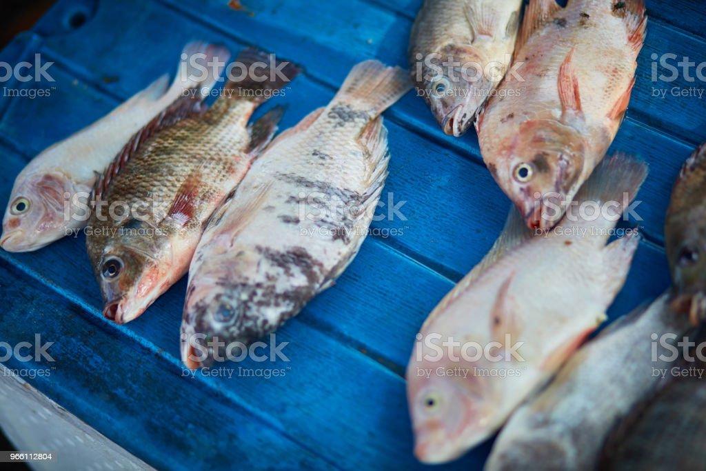 Крупным планом рыбы для продажи на рынке - Стоковые фото Без людей роялти-фри