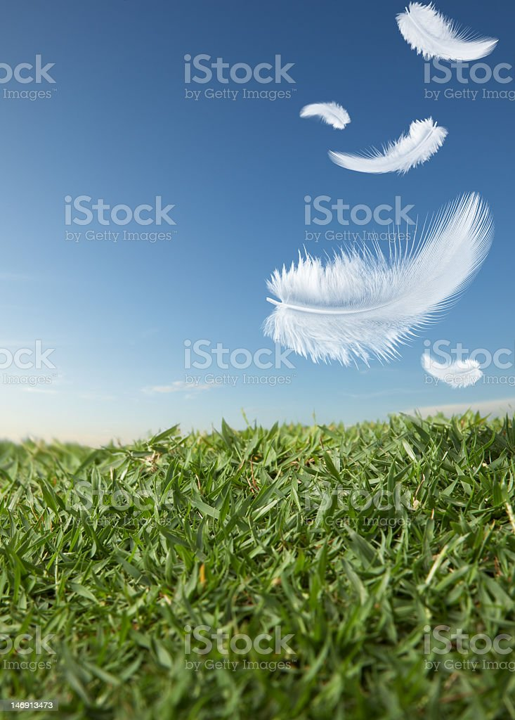 Close-up of five white feathers falling on the green grass royalty-free stock photo