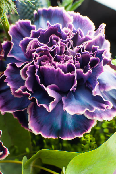 Nahaufnahme von floralen Zusammensetzung, Bouquet von Nelken Blume. – Foto