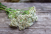 Closeup of flower achillea millefolium, commonly known as yarrow or common yarrow on rustic weathered wooden boards. Medicinal plant.
