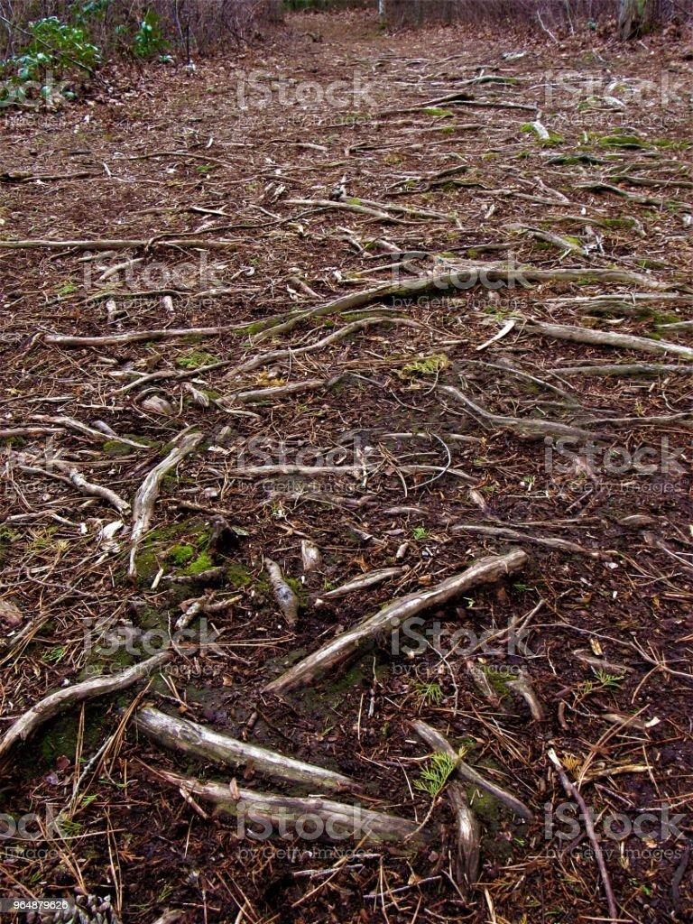 森林根系特寫 - 免版稅國家公園圖庫照片