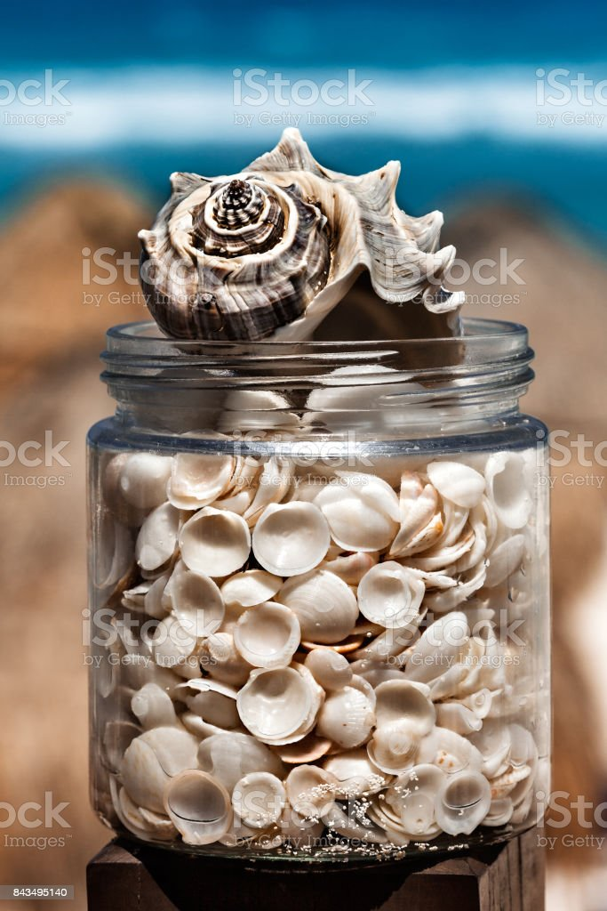 Closeup of found shells in a glass jar on the beach, tropical concept stock photo