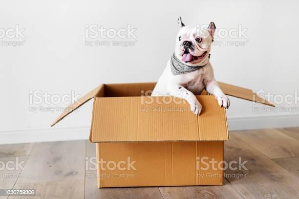 Closeup of french bulldog picture id1030759306?b=1&k=6&m=1030759306&s=612x612&h=4sbd252w9fniqokdn7mvfijfcgf8vho4rqhdfsj ciw=