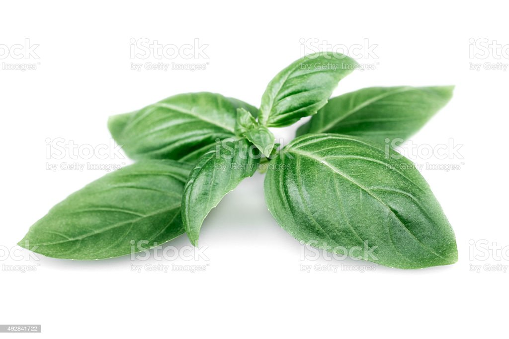 Closeup of fresh basil leaves on white background stock photo