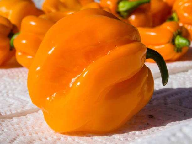 Closeup of fresh chillies Habanero Orange - foto stock