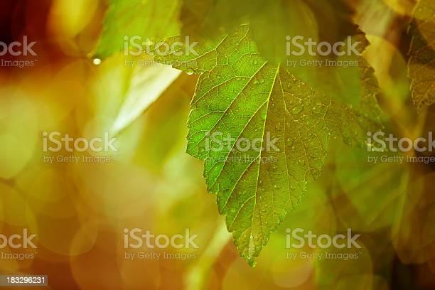 Closeup of fresh green leafs picture id183296231?b=1&k=6&m=183296231&s=612x612&h=q3j5a t8kiiszfejezmpz u1namey8bce7bvyotpu74=